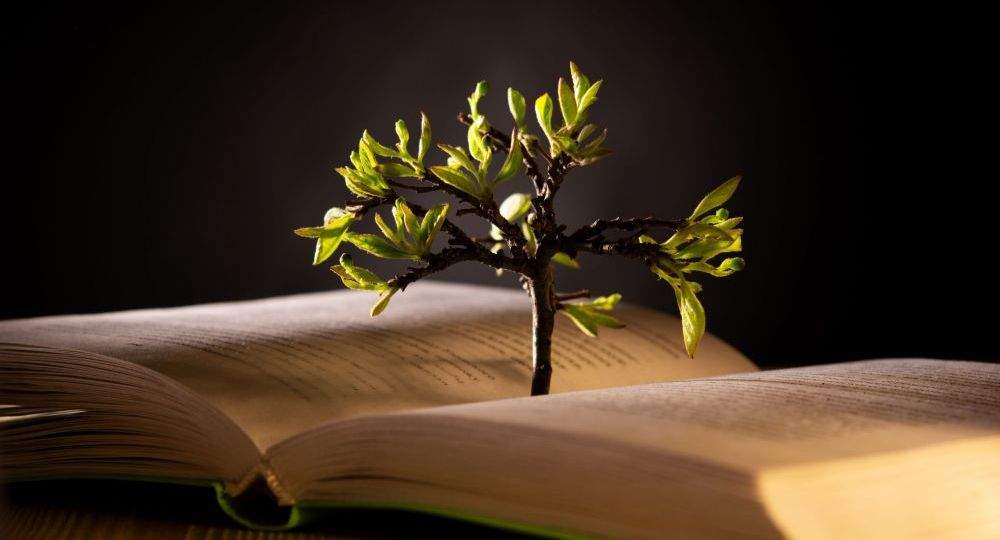 growing tree with green leaves from an open book